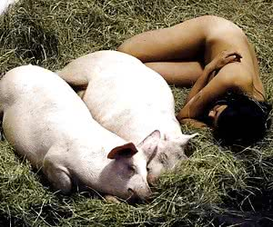 Breed Sows